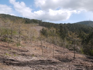 área afectada da Cruz da Maceira