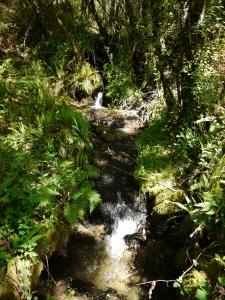 área de ribeira dun dos nacementos do río da Fraga