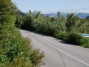 Estrada EP-1104 Abelendo-Coiro na zona Laxielas. Esta estrada comunica Moaña con Cangas polo interior.
