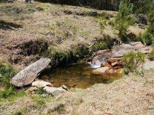 desbroce área higrófila do rego da Miñouba