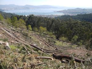 restos das cortas coas pistas de acceso e a ría