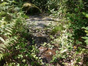 vexetación e auga ao redor do petróglifo de Pozo Garrido