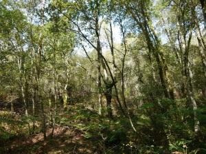 bosque aluvial do rego da Fraga