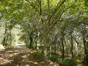 plantación de frondosas en Regadantes