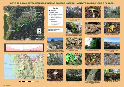 Ribeiras do rego Nocedo. Habitats, fauna, flora e fungos