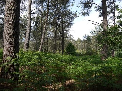 área forestal de Monte Furcos