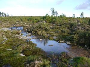 brañas no nacemento do río dos Ladróns (Montes do Morrazo)
