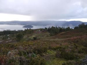 breixeira seca no alto do monte Pornedo (Montes do Morrazo)