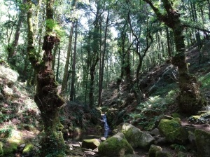 ribeira do río da Fraga (Montes do Morrazo)