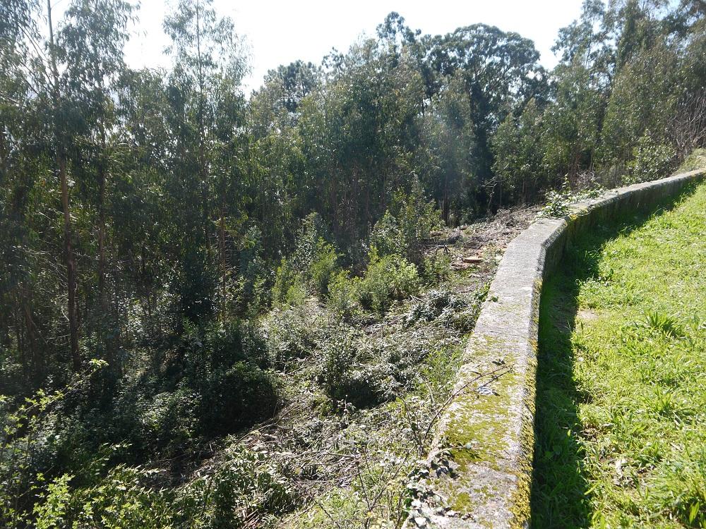 invasión de eucalipto e acacia no monte dos Remedios (Tirán-Moaña)